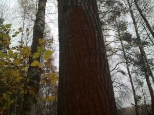 les i zakom