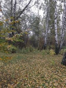 lesa karelii