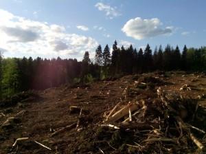 vyrubka lesa