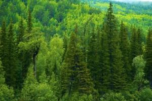 lesa rossii