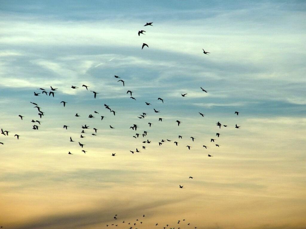 orientazija ptiz