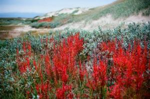 karelija tundra