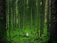 zabluditsja v lesu